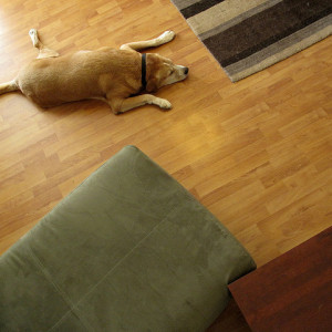 Best Pet-Friendly Flooring