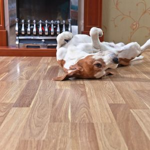 3 Residential Flooring Options For Homes With Pets